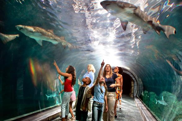 Adventure Aquarium Visit Philadelphia Visitphilly Com
